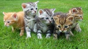 Many kittens